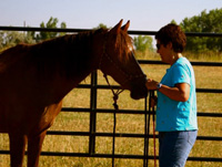 Learning to have a relationship with a horse from the ground prior to riding, can greatly enhance your connection with the horse, as well as influence the responsiveness and attention the horse offers you. (Photo credit Josh Levin)