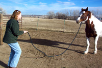 Wanting the horse to move backwards, this student assumes a focused, assertive stance and begins wiggling her finger at the mare as a form of stage 1 pressure. As the horse has not moved sufficiently back, she then offers a stage 2 pressure, shaking her wrist, sending energy down the rope.