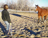 As soon as the horse looks at you, cease forward movement and instead relax and take a step backwards. This offers a thanks for the acknowledgement by releasing the energetic pressure of your approach. Often times, this simple gesture, can cause the horse to actually walk up to you.