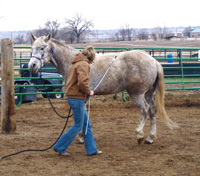 Using a focused and concentrated intent, rhythmically tap the air toward your horse's hindquarters. The pressure of your body language combined with the rhythmic pressure of the stick will encourage your horse to step his hind feet across, out of your space, as this gelding is demonstrating.