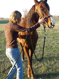Once the horse offers one step forward and around with the front leg release the pressure and rub your horse to a relaxed stop.