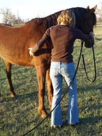 Place one hand on the side of your horse's face and the other on the shoulder. Using progressive stages of pressure ask the horse to step one front foot in front of the other yielding out of your space.