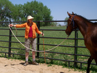 The send is made up of 'point-lift-tag'. Since this gelding is responding to the stage 1 request by moving out and around, no further stages of pressure are needed. If he were to not respond the handler would lift her stick out to the side and then tag the horse on the shoulder if necessary.