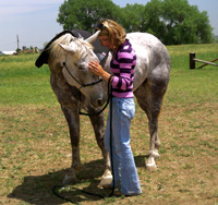By saddling our horse in partnership we invite them to become a part of the relationship. This gelding seems to appreciate my taking the time to consider him as I tack up and offers his affection back.