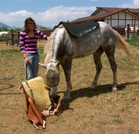 Part of considering the horse is giving them the opportunity to check things out, so that they may feel confident and trusting of the experience.